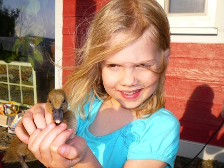 Rowan with a duckling from our new home laying flock of Khaki Campbells
